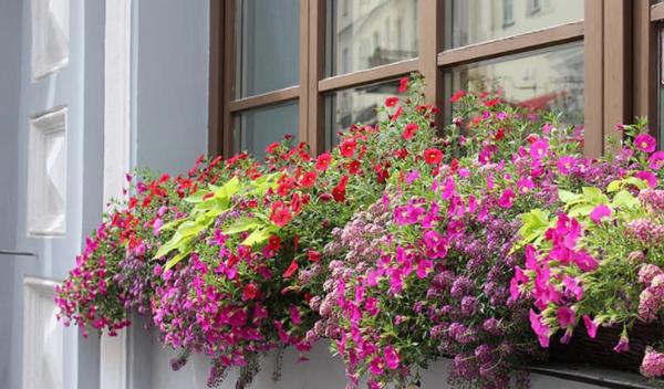 Аптека до прозореца: Какви лекарства растат в саксии