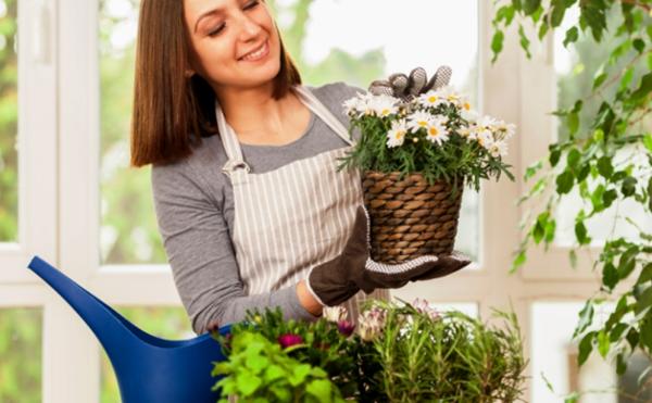 8-те стайни растения, които носят късмет, пари и семейно щастие