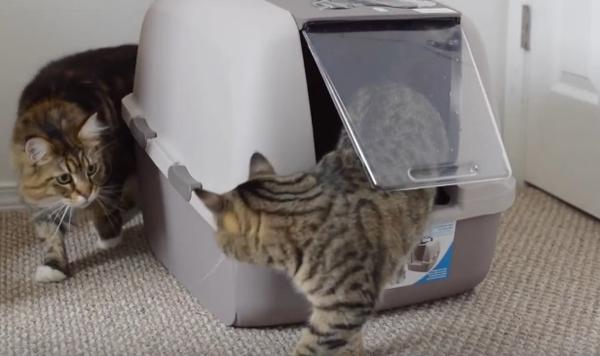 Причини, поради които котките спират да ползват тоалетната си