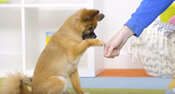 Как да почистите лапите на кучето си