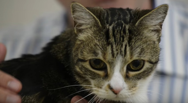 Как се променят навиците на котките с възрастта