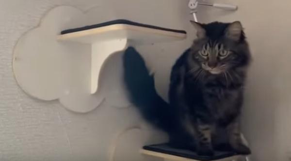 Признаци, че котката ви е стресирана