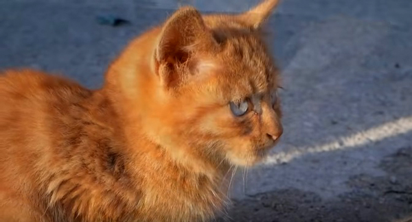 Как да помогнете на бездомна котка