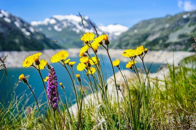 Еньов ден – цветята и билките имат лечебна сила