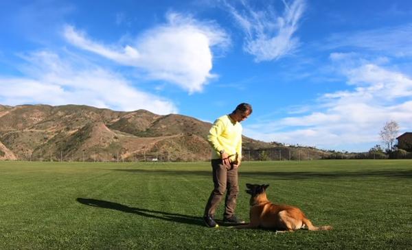 Ползите да играете с кучето си